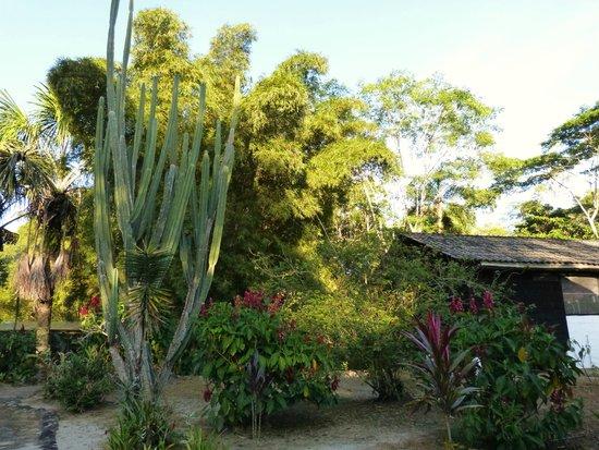 Sacha Runa Jungle Lodge : Natur pur!