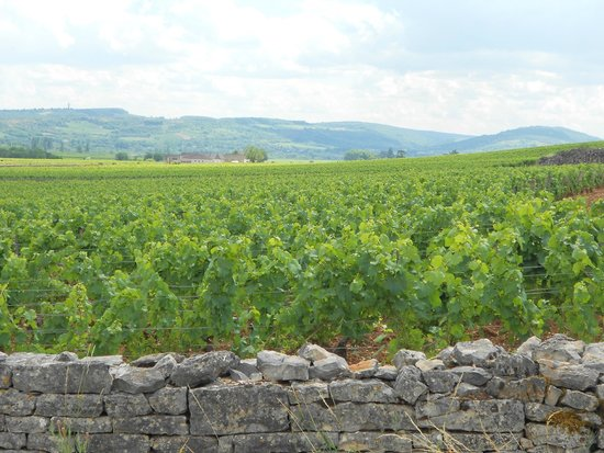Burgundy by Request : more vineyards