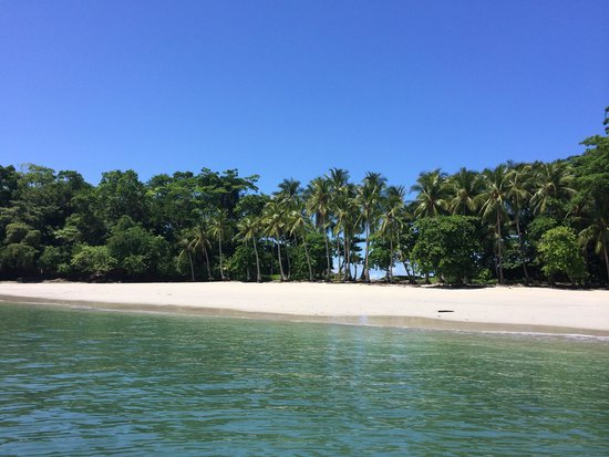 Hotel Bocas del Mar : Our private island while on our boat tour