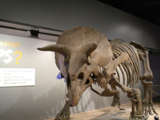 National Museum of Natural History : Triceratops Dinosaur on display