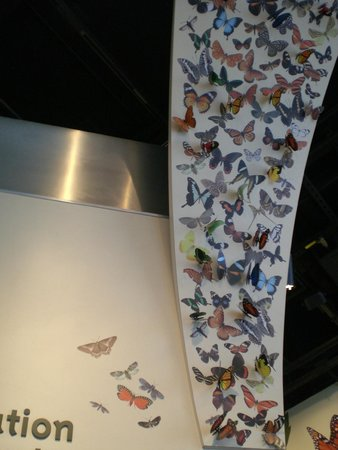 National Museum of Natural History : Butterfly banner near the Butterfly Pavillion