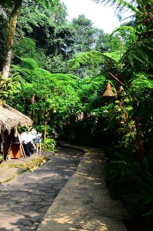 Kampung Daun: Path