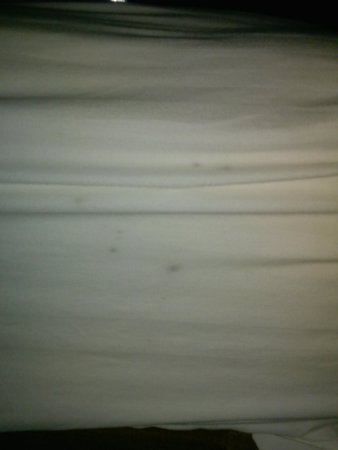 Days Inn Willoughby/Cleveland: sheets