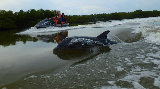 Capt. Ron's Awesome Everglades Adventures : Fun with the dolphins!
