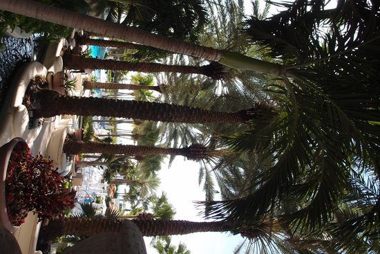 Loews Miami Beach Hotel: hotel to pool
