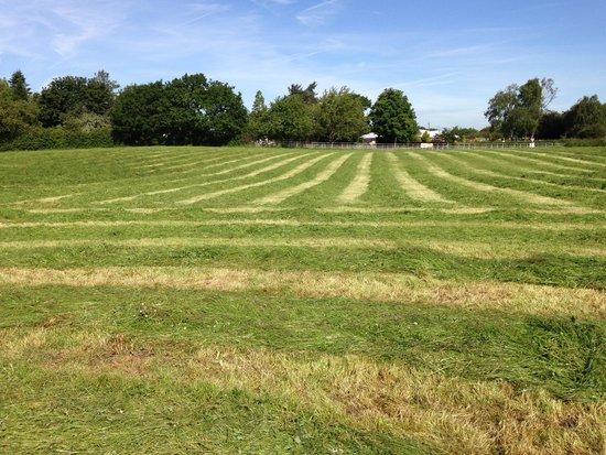 Whitethorn Farm Bed & Breakfast: Set in 600 Acres