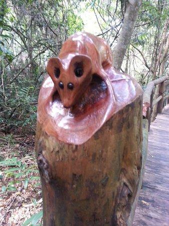 Secrets on the Lake: Boardwalk carvings