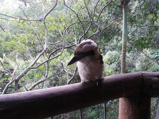 Secrets on the Lake: Kookaburra
