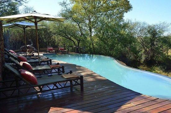 Sanctuary Makanyane Safari Lodge: Main Pool