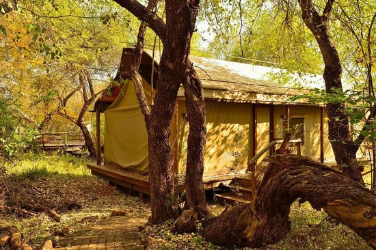 Thakadu River Camp : Safari tent