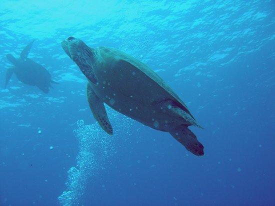 Kaluku Gili Resort : Diving at Gili Air with Blue Marine Dive Centre