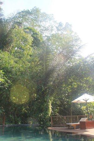 Nandini Bali Jungle Resort & Spa : Piscine à débordement