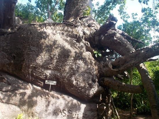Safari Blue Tour : le baobab