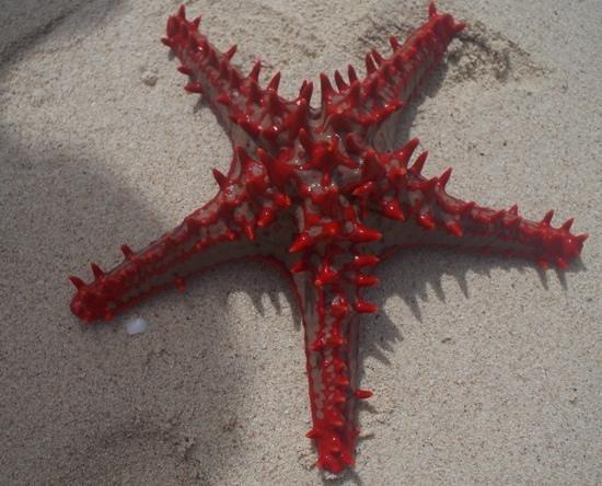 Safari Blue Tour : etoile de mer bercee