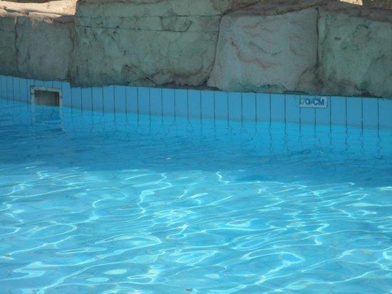 Amwaj Oyoun Hotel & Resort : Scum Line