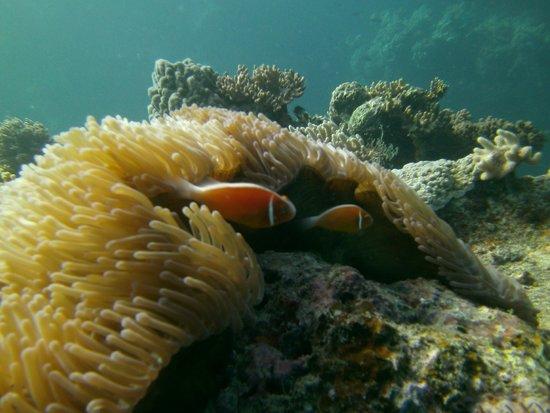 Wananavu Beach Resort: Diving was amazing