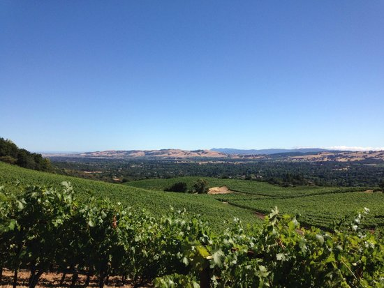 Your Driver In Napa: B Wise Winery - Sonoma Valley