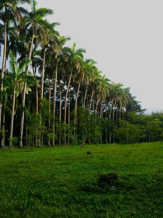Lancetilla Botanical Garden: love all the palms and the green