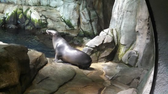 Moody Gardens: The seals and Sea Lions getting ready to eat