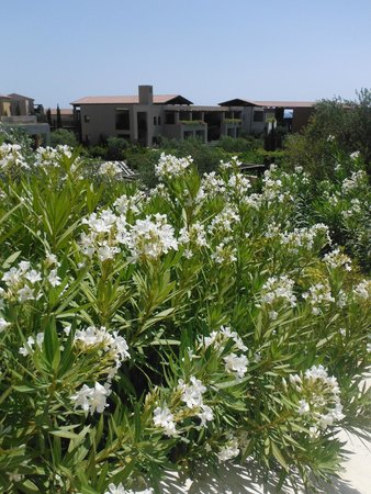 The Romanos Resort, Costa Navarino: En rentrant de la plage