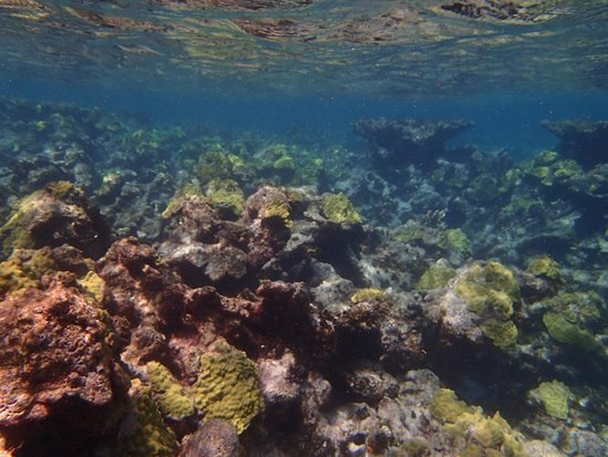Shoal Bay : Amazing coral