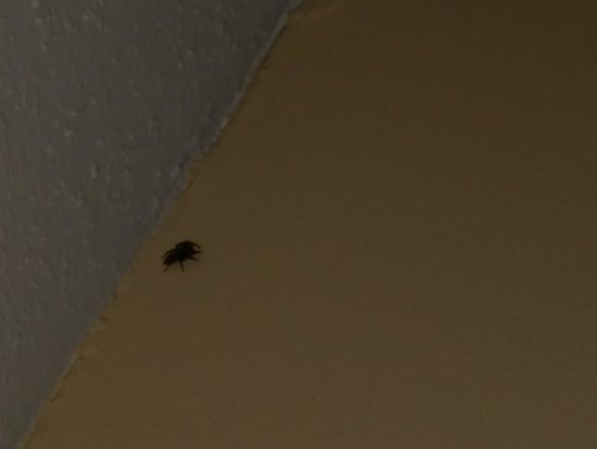 Prytania Park: This is the spider near the ceiling in our room