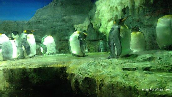 Osaka Aquarium Kaiyukan: penguins