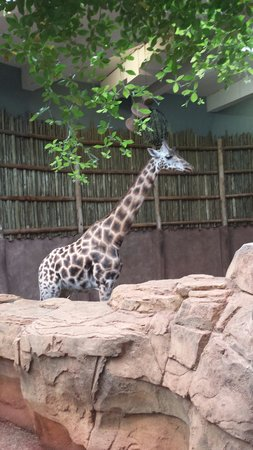Lincoln Park Zoo : .