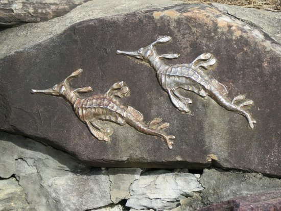Shelly Beach: Beautiful Artwork - Weedy Dragon Pictured