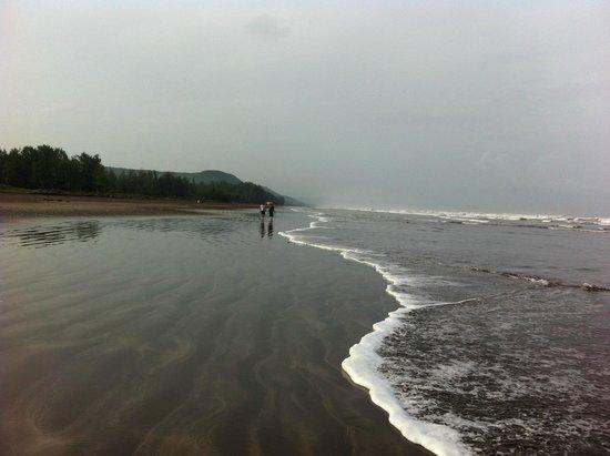 Lotus Beach Resort, Murud-Dapoli : Beach View