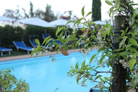 Agriturismo Cesani: הבריכה