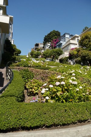 San Francisco Shuttle Tours: Lombard St.