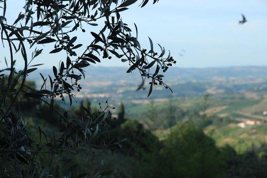 Agriturismo Cesani: נוף מהמקום