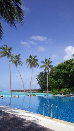 Meeru Island Resort & Spa : Infinty Pool