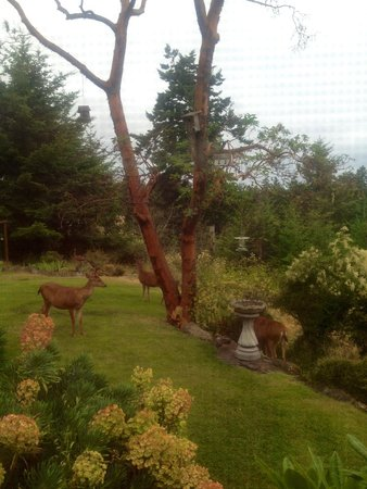 Wildwood Manor Bed and Breakfast: Beautiful gardens and 'guests' enjoying the morning