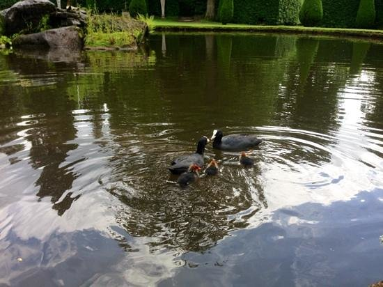 Chatsworth House: Feeding the Moorhens in the gardens.