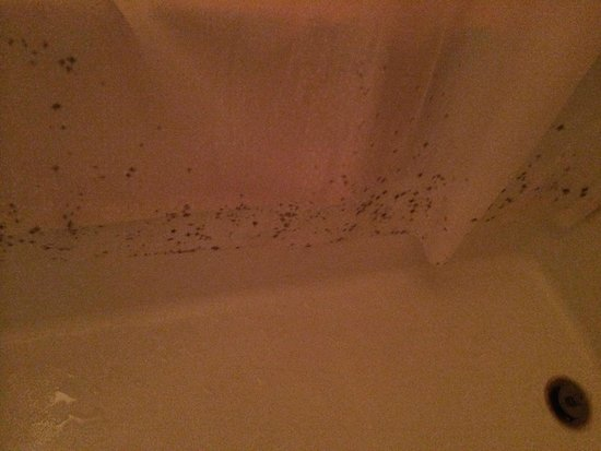 Gatlinburg Town Square Resort By Exploria Resorts: mold on the 2nd bathroom shower curtain