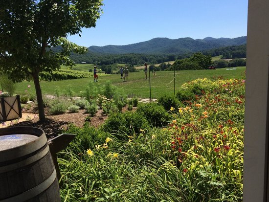Pippin Hill Farm & Vineyards : View of the lawn- great for picnicking and lawn games.