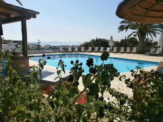 Albatross Hotel: piscine 2