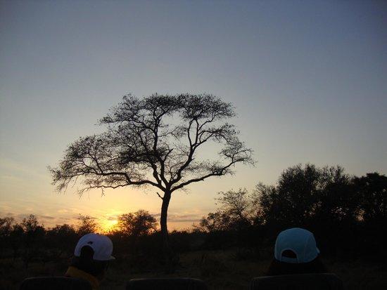 Cheetah Plains : sunset at the game