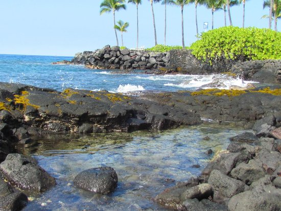 Courtyard by Marriott King Kamehameha's Kona Beach Hotel: The rocky part of the beach at the hotel.