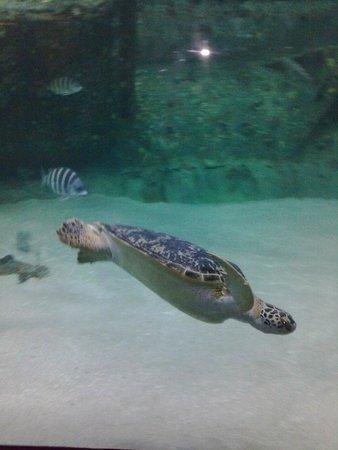 A Place at the Beach III : NC Pine Knoll Shores Aquarium