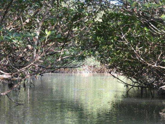 Motorized Kayak Adventures: Blue Lagoon Mangrove tunnel