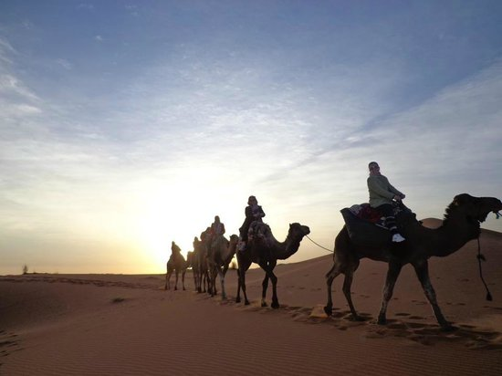 Camel Safari Camp: When you dont want to leave the comfort of your hotel and cant miss out the sunset and a camel r