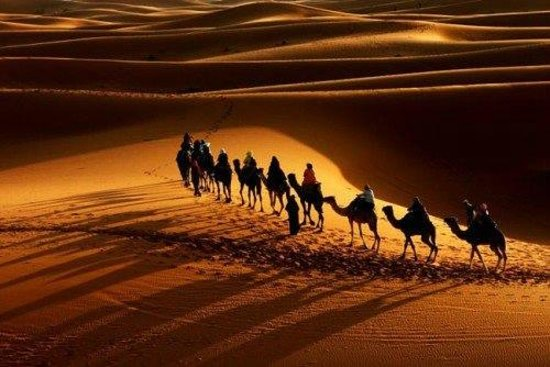 Camel Safari Camp: Nothing matches the experience of travelling , as desert dwellers have travelled to sleep under