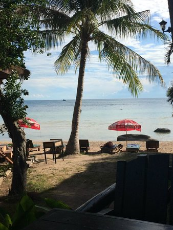 Palm Leaf Resort: Aussicht von der Terrasse