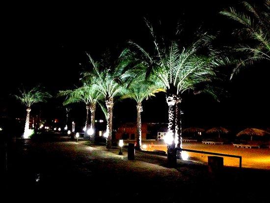 Caribbean World Resorts Soma Bay: palms