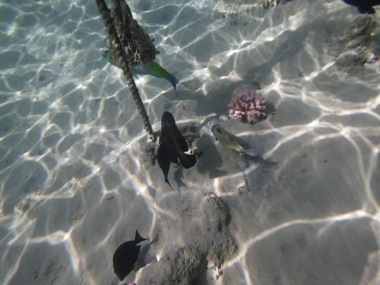Sunwing Waterworld Makadi Hotel: the sea is so clear