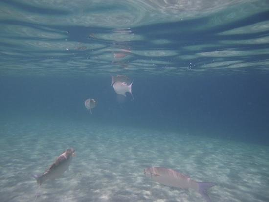 Sunwing Waterworld Makadi Hotel: great snorklling