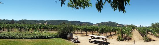 O'Brien Estate Winery: Panorama of the vines at O'Brien